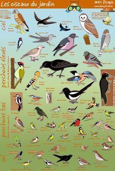 Les oiseaux en fiches, coloriages, photos et dessins avec Pouyo