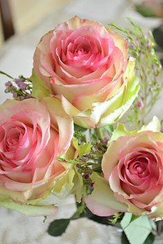 Gorgeous roses.