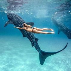 Swimming with whale sharks No matter how many photos I see of these guys, they still amaze me! Tag me in YOUR whale shark photos, would love to see them all Photo of taken by Places To Travel, Places To Go, Vacation Places, Swimming With Whale Sharks, Cebu City, Underwater Photography, Beauty Photography, Travel Aesthetic, Adventure Is Out There