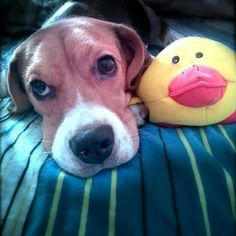 We look Alike, at times we even talk Alike! Funny Guys, Toys R Us, Beagles, Look Alike, Man Humor, Thankful, Times, Instagram Posts, Dogs