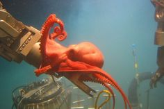 An octopus grapples with the arm of a deep sea vessel