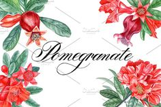 Pomegranate by Watercolor life on @creativemarket