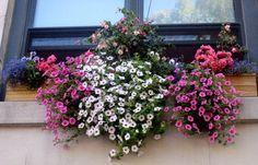 The Urban Gardener: Window Boxes | Apartment Therapy