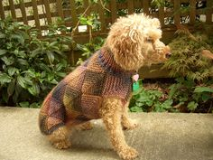 shima glanz shima glanz Douglas Pattern: Diamonds for Dogs by Jane Salmon Crochet Dog Clothes, Pet Clothes, Dog Clothing, Chicken Sweater, Small Dog Sweaters, Dog Pattern, Free Pattern, Puppy Coats, Knit Dog Sweater