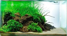 Aquascaping categories--my own take on it. Aquascaping, Aquarium Aquascape, Aquarium Terrarium, Planted Aquarium, Nano Aquarium, Saltwater Aquarium, Freshwater Aquarium, Aqua Aquarium, Nature Aquarium