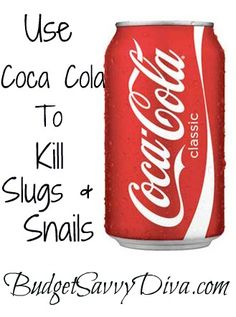 Use Coca Cola To Kill Slugs & Snails  Pour a small amount of Coca Cola in a bowl ( can be flat soda) the snails and slugs will be attracted to the soda. The acid in the soda will kill these pests.
