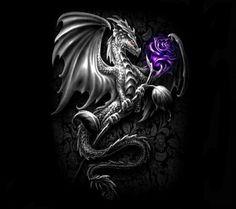Dragon & purple Rose