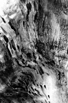 Old wood textures by ioanna papanikolaou - Abstract closeup of an old tree bark in black and white.