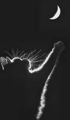 Black and white photograph kitty cat and the moon