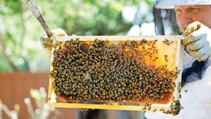 Is beekeeping the right hobby for you? We provide you with key factors to take into consideration and steps to get you started. Bee Supplies, Bee Keeping, Queen Bees, Bird Feeders, Outdoor Decor, Bee Hives, Health Department, Consideration, Factors