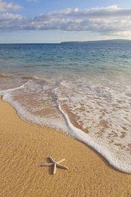 Starfish on Makena Beach