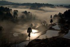 Rice Paddies in the Dawn Mist