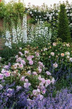 english garden Mixed Borders - Rosa Olivia Rose Austin / bred by David Austin: English Cottage Garden, Garden Landscaping, Garden Design, English Garden, Garden Borders, Herbaceous Perennials, Cottage Garden, Plants, Garden Inspiration