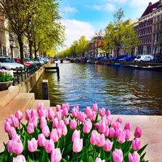 Amsterdam's Tulips in Spring: Finding Bridget
