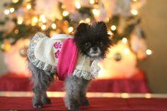 Dog Coat - Toy Dog coat - Fleece Dog coat - Dog Clothes - Pet Coats - Pets - Custom Dog Coat - Dog Apparel - Winter Dog - Custom Dog Jacket by bethsposhpets on Etsy https://www.etsy.com/listing/215847468/dog-coat-toy-dog-coat-fleece-dog-coat