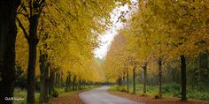 road into autumn Autumn Leaves, Country Roads, Explore, Fall Leaves, Autumn Leaf Color, Exploring