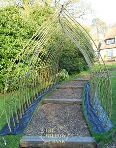 Buy Living Willow Structures - Arch • Willow Suppliers