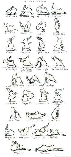 More adorable yoga bunny sequences