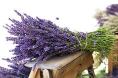Come coltivare la lavanda in vaso o in giardino   <3