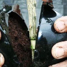 Kweekbal - Snel & Gemakkelijk te stekken – Weldoor Rose Bush, Diy Bar, Compost, Asparagus, Vegetables, Fish, Shopping, Drawing, Ideas