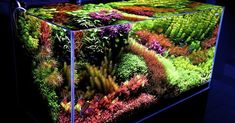 Aquascape Details   Tank Size 120 x 60 x 60 cm (47 x 24 x 24 in)  Volume 432L (114 gallons)  Background Black adhesive  Lighting 8x52w T...