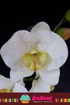 Orquídea phalaenopsis de Azúcar