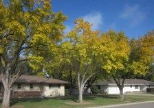 The benefits of having trees in your yard - Joeybaron Rural Area, Better Life, Improve Yourself, Benefit, Trees, Yard, City, Plants, House