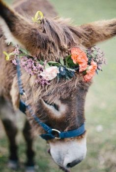 I wouldn't do this to my horse but sometimes donkey's and mules just seem like they should wear a flower tiara.