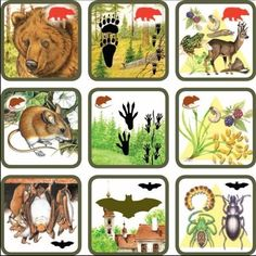 Pexetrio Plus: Savci Animal Activities, Preschool Activities, Science For Kids, Science And Nature, Animals For Kids, Animals And Pets, Montessori Practical Life, Animal Tracks, Forest Theme