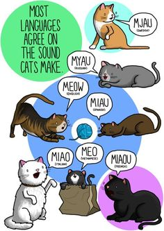 #Infographic Cats: What Noises Do Animals Make In Other Languages? Part 1 ✿ Spanish Learning/ Teaching Spanish / Spanish Language / Spanish vocabulary / Spoken Spanish ✿ Share it with people who are serious about learning Spanish!