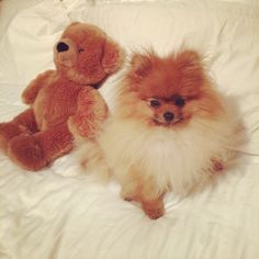Wolfgang and his teddy.