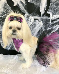 Bella Model, Dogs, Fashion, Moda, Fashion Styles, Pet Dogs, Doggies, Fashion Illustrations