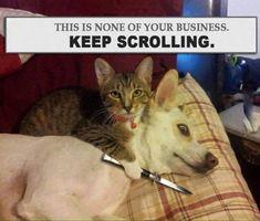 Funny fail - cool image