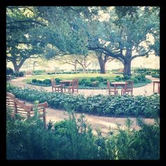 Baylor's new Garden of Contentment outside of the Armstrong Browning Library