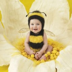 our little yellow jacket