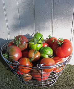 Tomato harvest from my garden. Heirlooms, Green Zebra, Tigerella, Black, Yellow, and Pineapple. YUM!