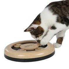 Älypeli Fun Circle Cat Activitycat Toyscool Stufffunstrategy
