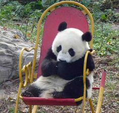 Just chilling in a rocking chair