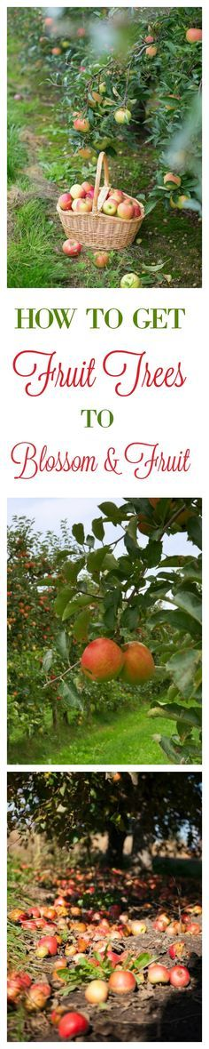 Come Learn What This Old Time Method Is For Making a Fruit Tree Blossom & Fruit