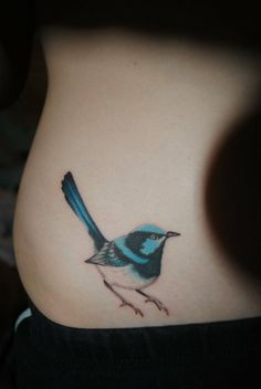 My first tattoo, a superb fairy wren. My friends have told me that animal that describes me best is one of those small birds who's timid, but curious at the same time. Done by Alex Gama at Bodytech in Gainesville, FL.