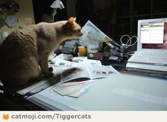 my scrapbooking-cat :D