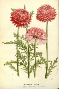 v.17 (1867-68) - Flore des serres et des jardins de l'Europe - Biodiversity Heritage Library