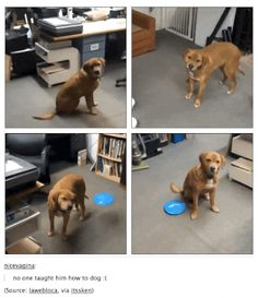 980x13 Tumblr has a good handle on the mindset of dogs (26 Photos)