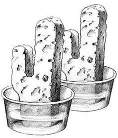 Cactus Science Experiment