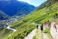 Chemins des Vignes, Martigny, Switzerland — by IntentionalTravelers. When we hiked up to Martigny's castle, La Batiaz, we discovered a 4 mile hiking trail through the vineyards that...
