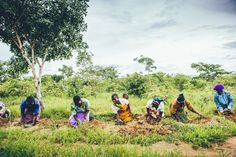Planting seedlings in #Malawi.   #grow #plant #reforestation #africa #ngo #nonprofitorganization #nonprofit #community #communitydevelopment #sustainablechange #travel #travelphotography #photography