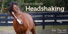 How To Handle Headshaking. I've only ridden ONE horse who did this--just in case it happens again. Glad I found this! <3