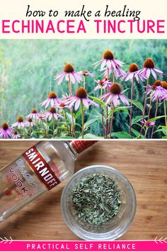 How to Make Echinacea Tincture: Tinctures are a convenient way to take your herb. Cold Remedies, Natural Health Remedies, Herbal Remedies, Flue Remedies, Healing Herbs, Medicinal Plants, Natural Healing, Herbal Tinctures, Herbalism
