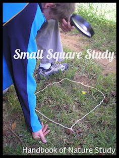 One Small Square Books tie in- Handbook of Nature Study: Outdoor Hour Challenge-Small Square Study Living vs. Non-Living Primary Science, Kindergarten Science, Teaching Science, Science Curriculum, Teaching Ideas, Preschool, Science Lessons, Life Science, Science And Nature