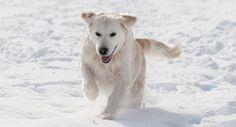 Snow Dog Dogs Best Life online magazine